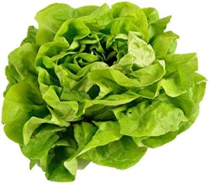 Buttercrunch Lettuce Seeds for Planting | Vegetable Seeds for Planting Outdoor Home Gardens | Heirloom & Non-GMO | Planting Instructions Included | 6 Grams Approx 3,500 Seeds